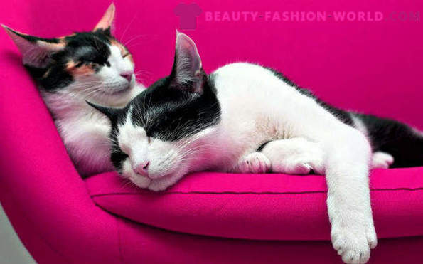 Furniture fabrics that are resistant to feline claws